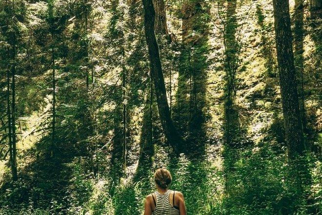 Grūda (Šaudzyklos kalnas -> Marcinkonių kelio plentas)